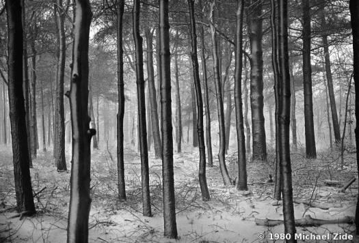 Zide_Woods_in_Snow