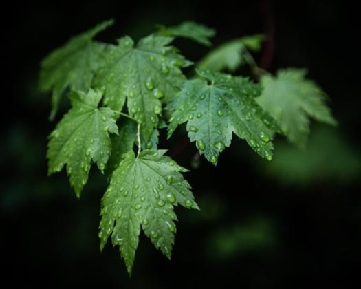 Leaves_Desat