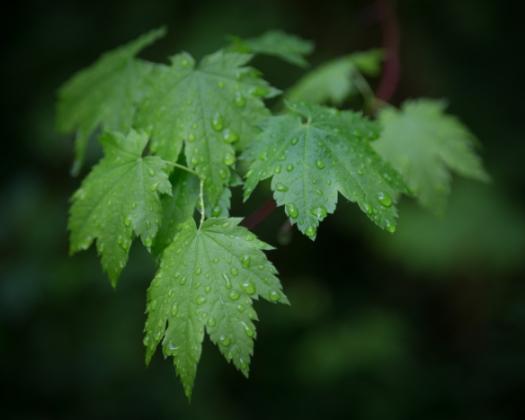 Leaves_Vignette