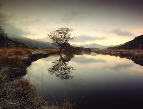 Tree-Lake-Eoghan-Kavanagh-1024x787