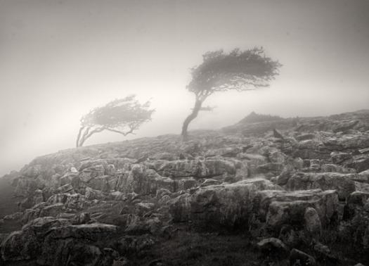 Dales Wind