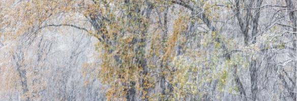 wpid4075-Autumn-Oaks-and-Snowstorm-El-Capitan-Meadow-Yosemite-National-Park-California-2013